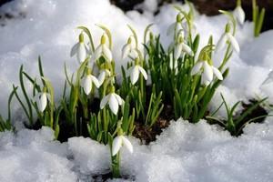 Когда придет весна в 2018 году в Москве